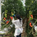 Harvesting 3